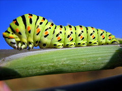 open source caterpillar